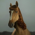 beautiful-lady-horse