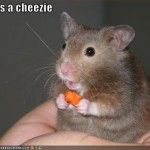 Funny-Mice-03